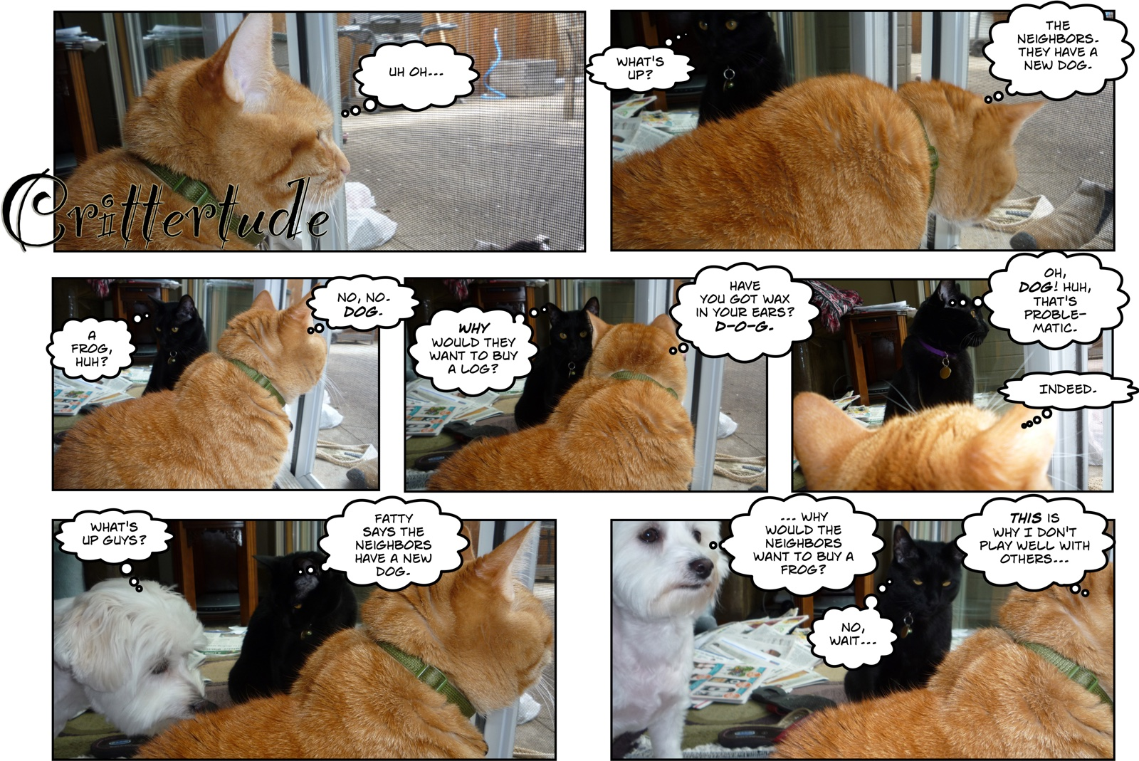 comic of cats and dog talking about frogs