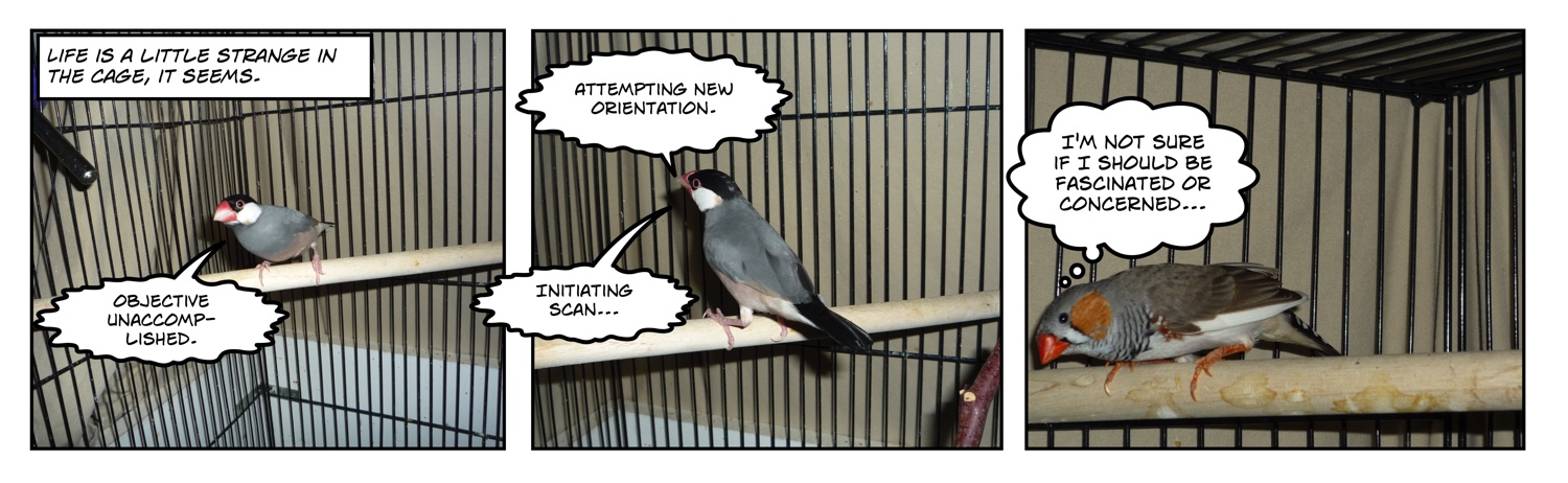 comic of finch watching another finch