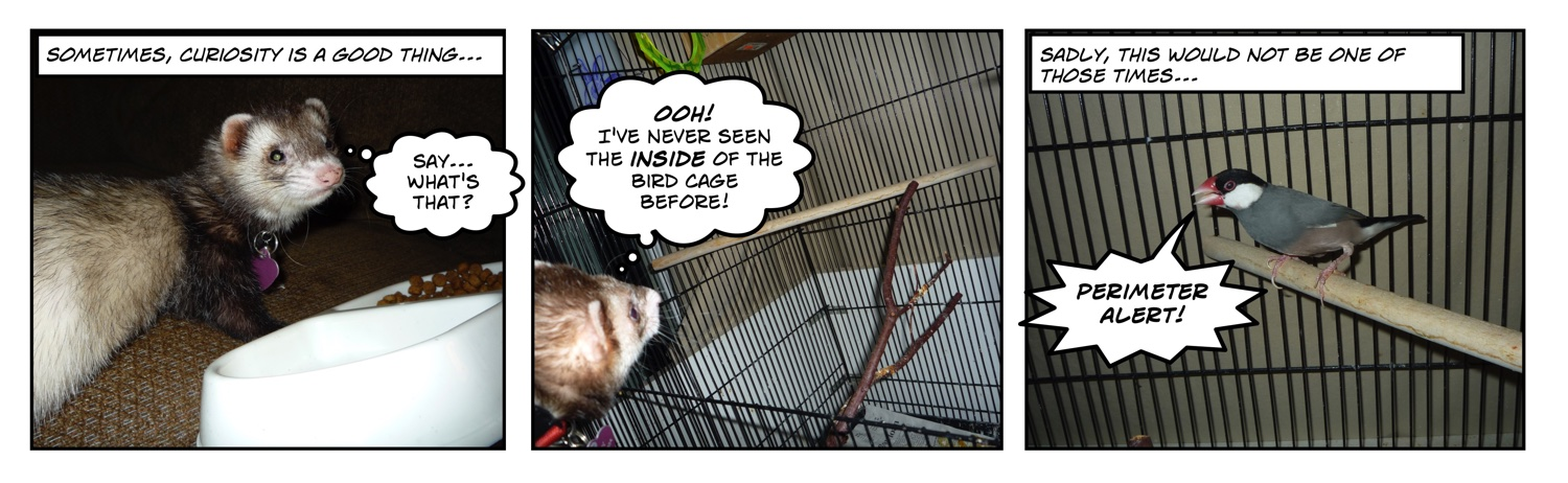 comic of ferret looking into bird cage