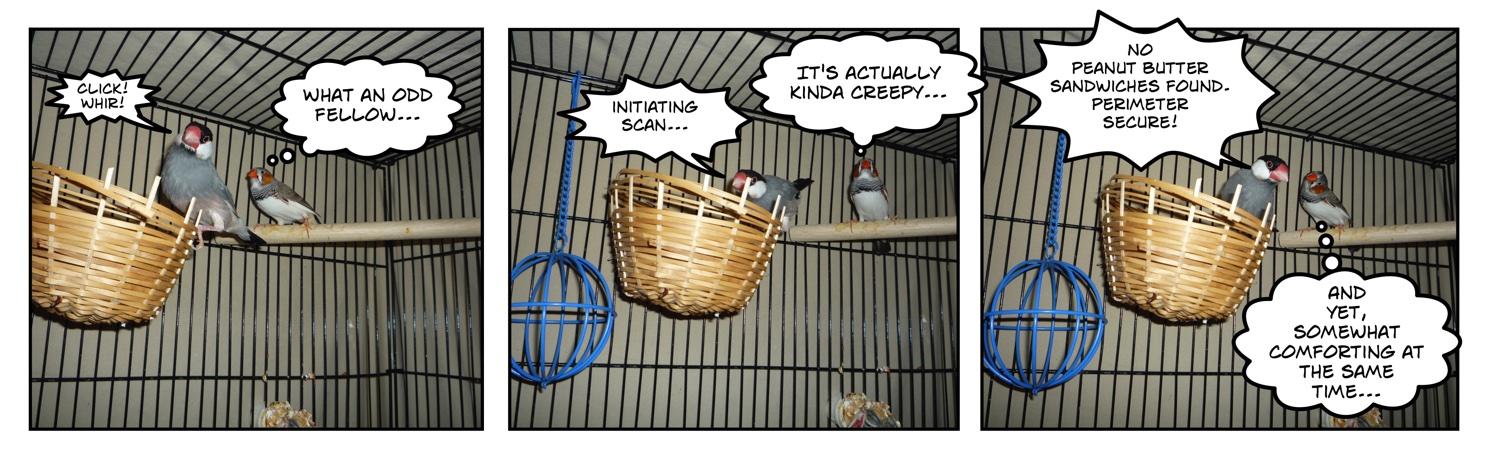 comic of two finches in a cage