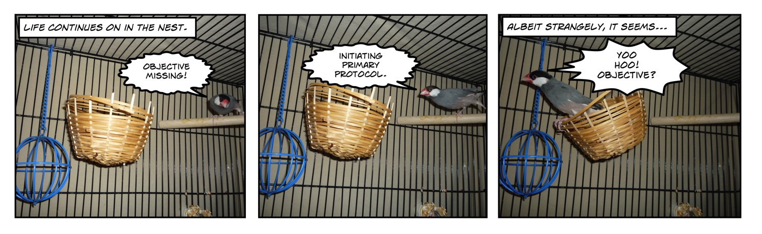 comic of zebra rice finch in nest in cage