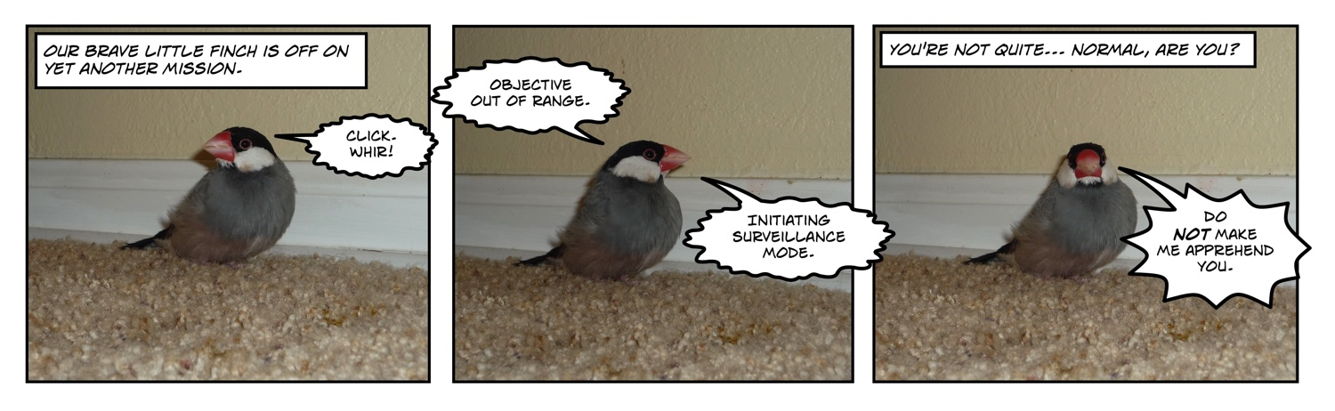 comic of java rice finch walking on carpet