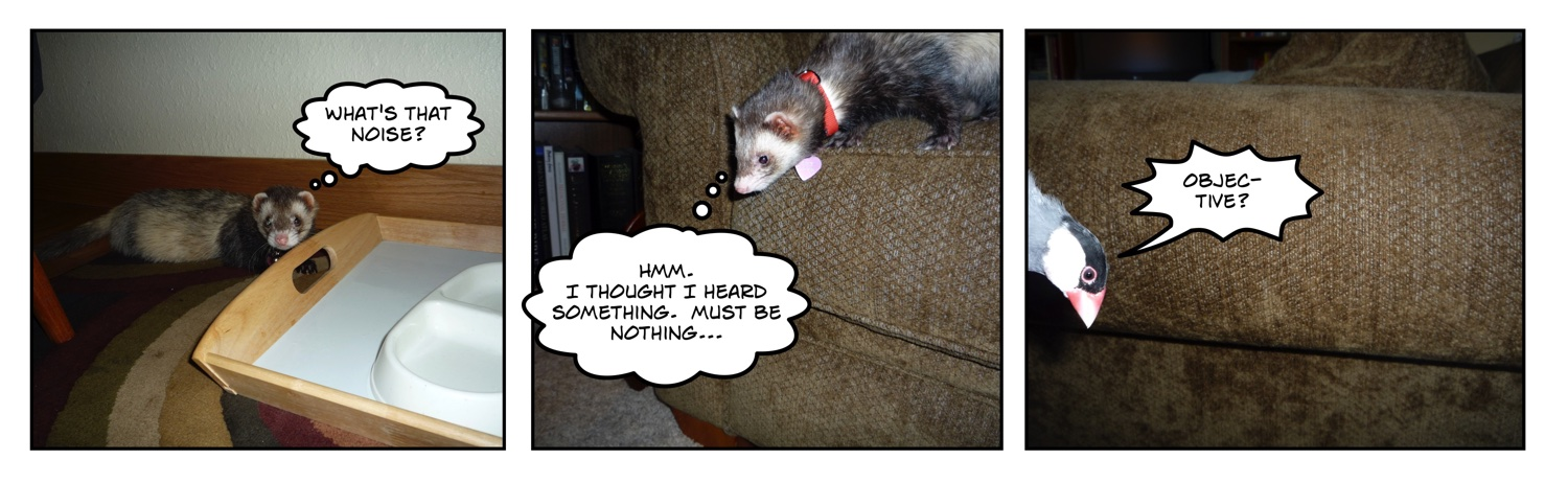 comic of ferret looking for java rice finch