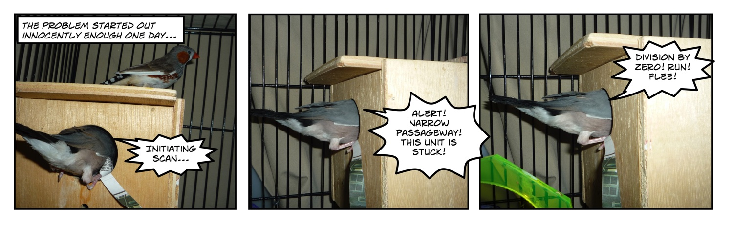 Comic of java rice finch halfway in nest box