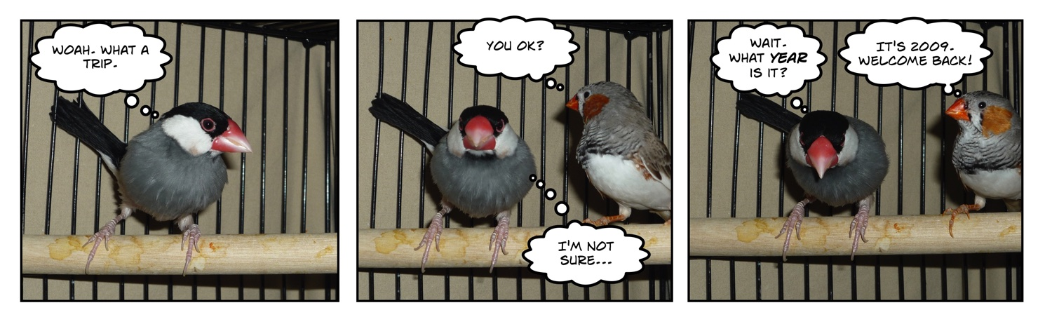 comic of two finches
