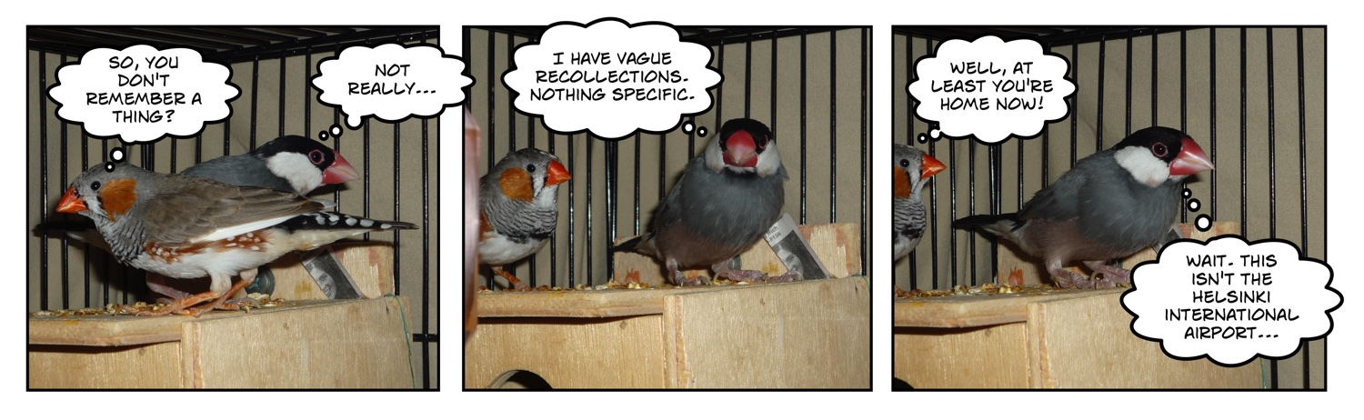 comic of two finches on roof of nest box