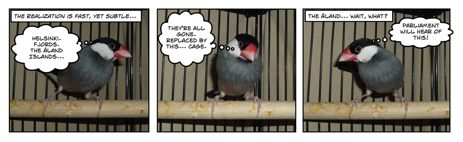 Comic of Java Rice Finch in cage