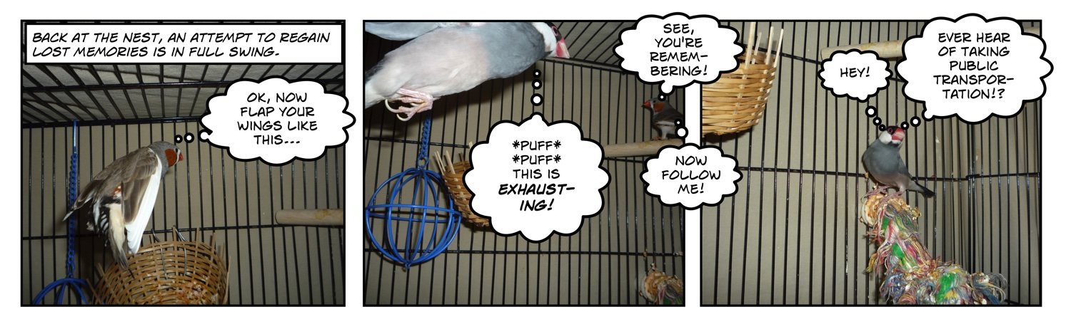 comic of two finches flying in a cage