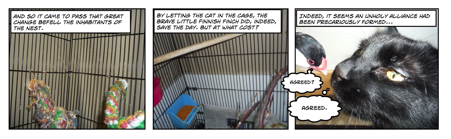 Comic of java rice finch looking at black cat