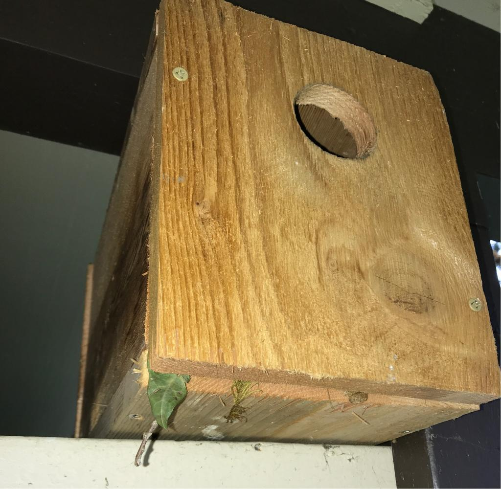 bird nest box full